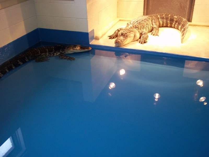 industrial epoxy floors for pet laboratories